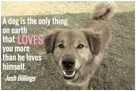 Dogs-captions-for-ig